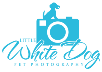 Little White Dog Pet Photography