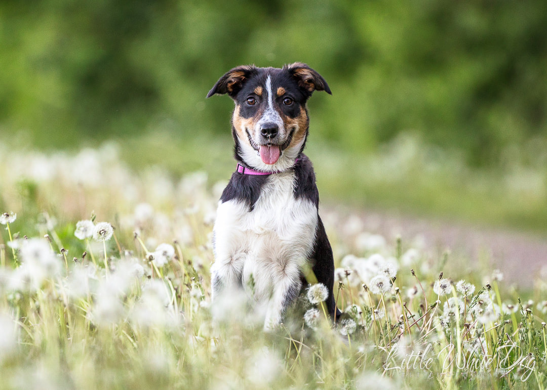 Art rendering of a bulldog with quote, You had me at cheese.