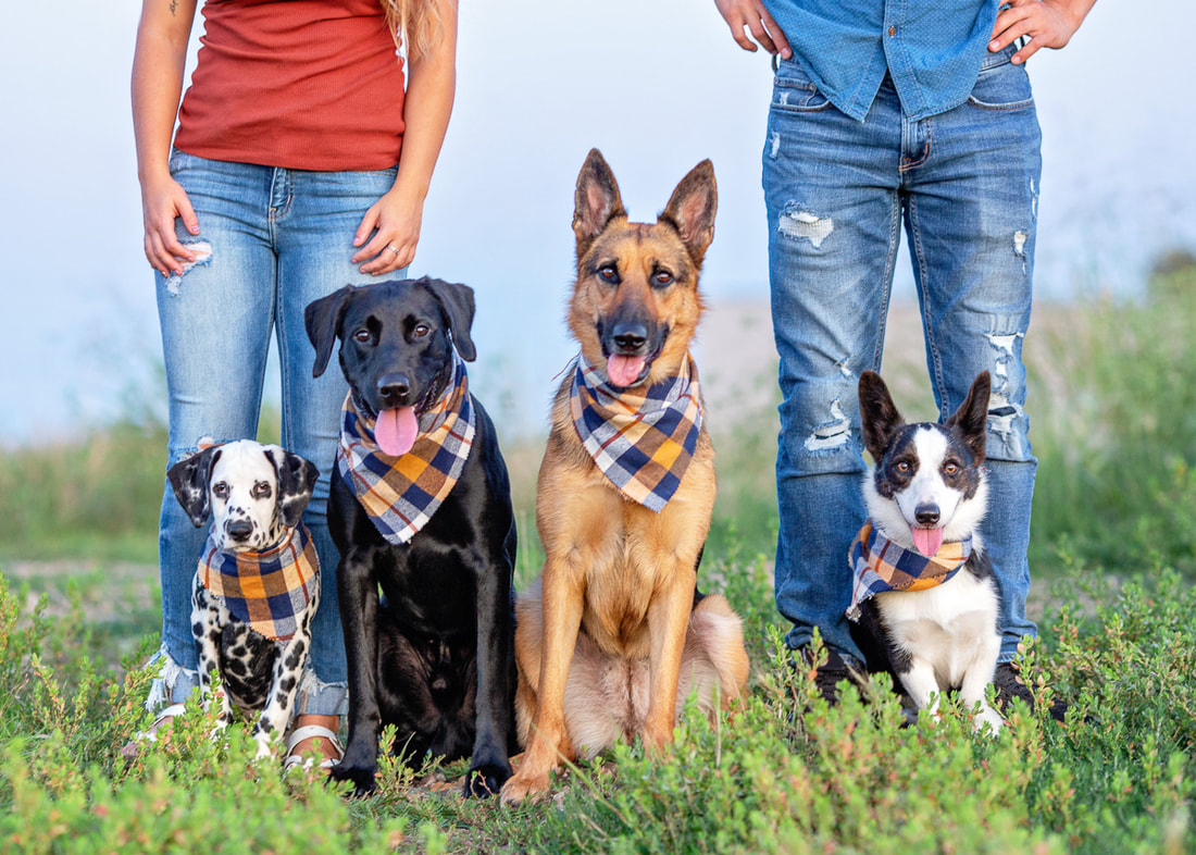 dog photography Sioux Falls - four dogs sitting at their owners feet in the summer grass