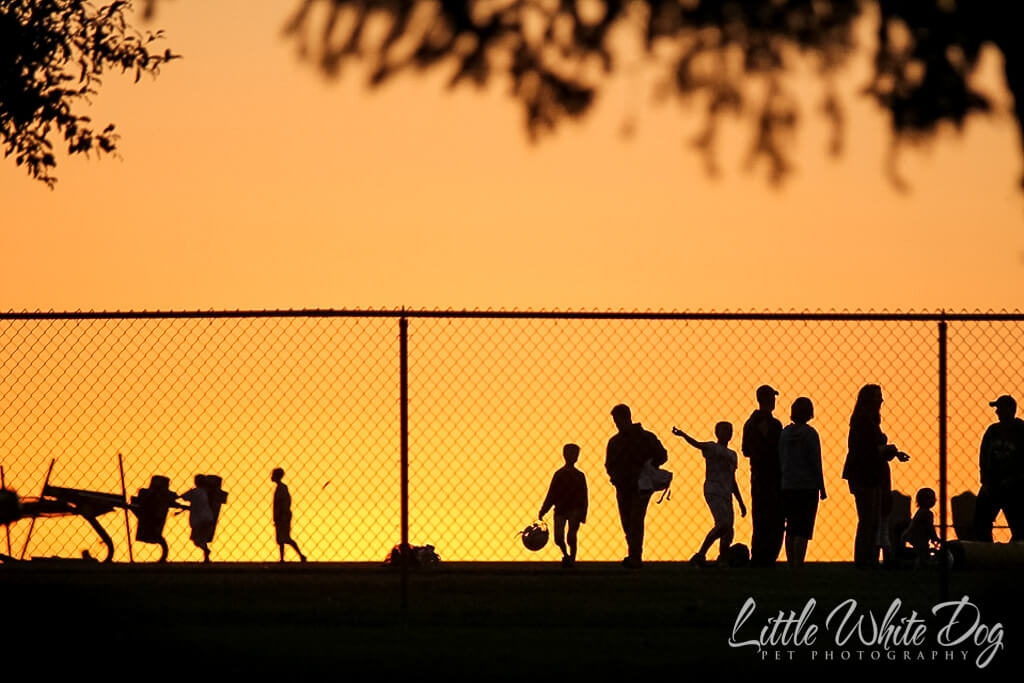 A silhouette of people leaving a pee wee football practice during sunset.