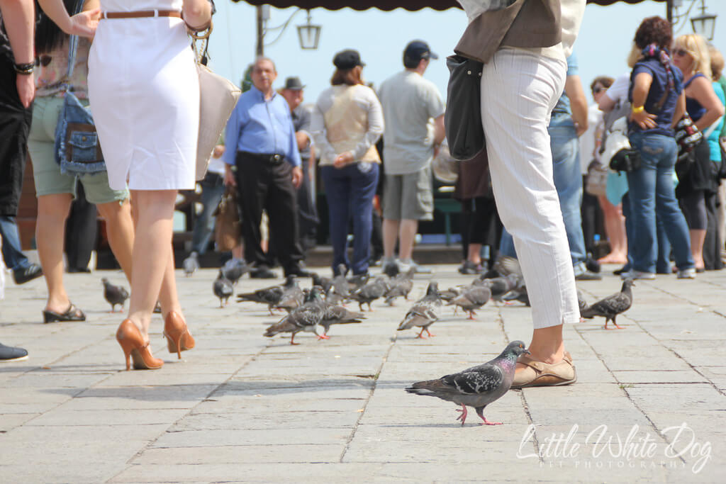 A picture of pigeons walking amongst human feet at St Mark's Basilica in Venice Italy.